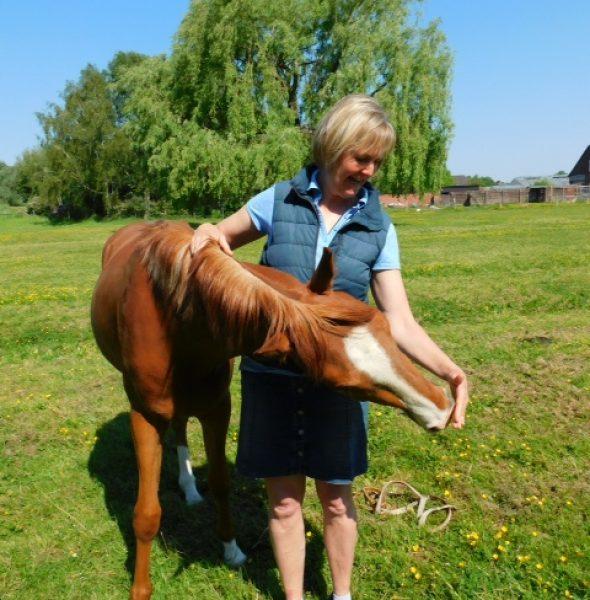 """Schnupperkurs: """"Pferde stärken Menschen"""""""