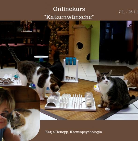 """Onlinekurs """"Katzenwünsche"""""""