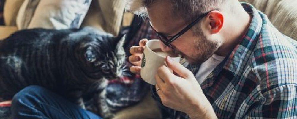 Katzensprache verstehen – die Grundlage für eine harmonische und erfüllte Katze – Mensch – Beziehung